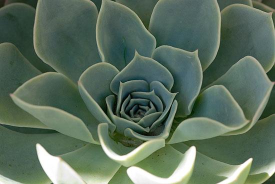 Fleurs plantes grasses et cact es lors de la manifestation carte blanche au paysage biot - Plantes grasses fleuries ...